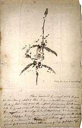 letter and drawing from Mary Anning announcing the discovery of a fossil animal now known as   Plesiosaurus dolichodeirus  , 26 December 1823