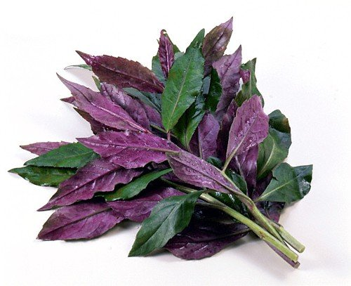 Okinawa spinach