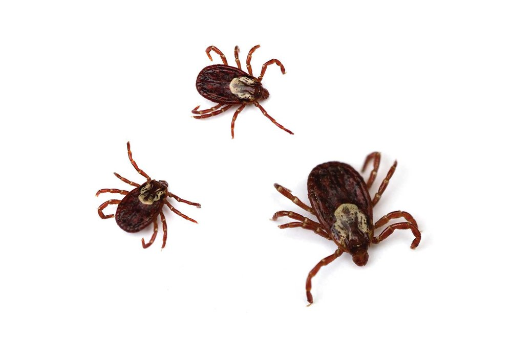 Ticks are Here - Our goal isn't to alarm our clients, but to keep them safe and informed- ticks sometimes carry and spread diseases. Our goal is to reduce risks by removing a tick's habitats and to reduce overall tick exposure.