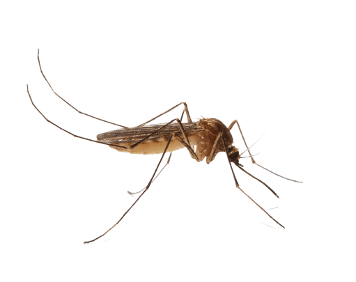 Mosquitos Love Humans - We provide recommendations for mosquito control and assistance if needed. Although relatively uncommon, mosquitos can carry and spread diseases. Our goal is to reduce risks by removing mosquito habitats and reducing mosquito exposure.