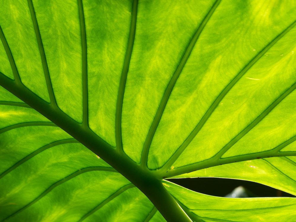 160529-leaf-008.jpg