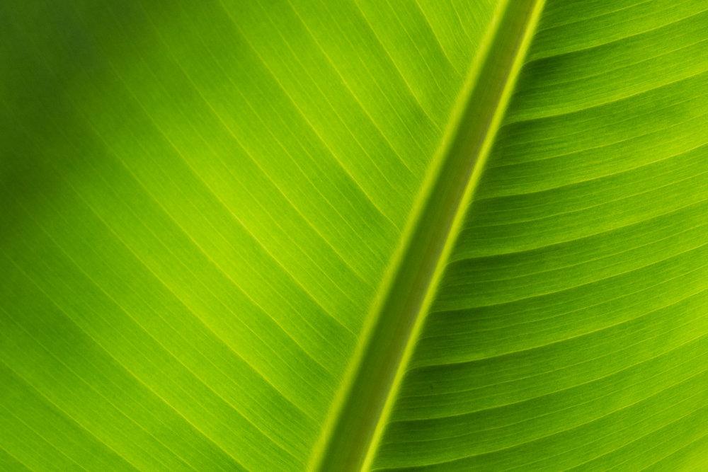 160529-leaf-009-2.jpg