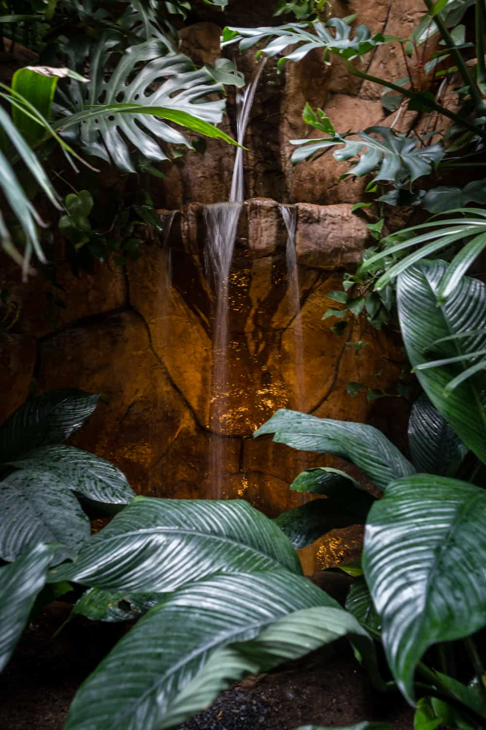 Close-up photo of waterfall in corner of exotic garden-style bathroom.