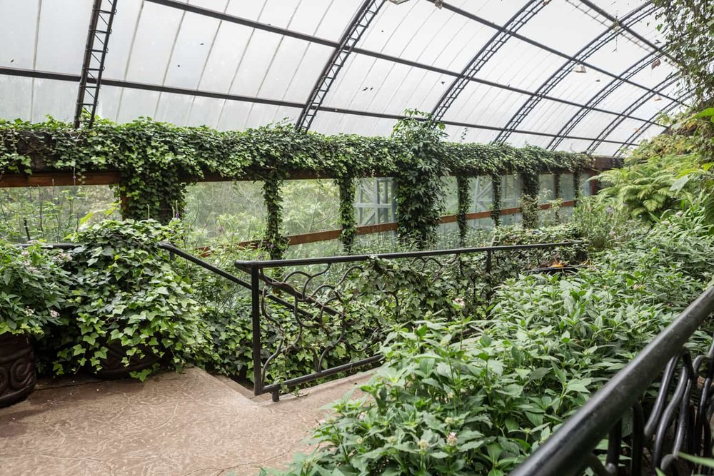 Upper level in butterfly garden ideal for elopement of small ceremony.