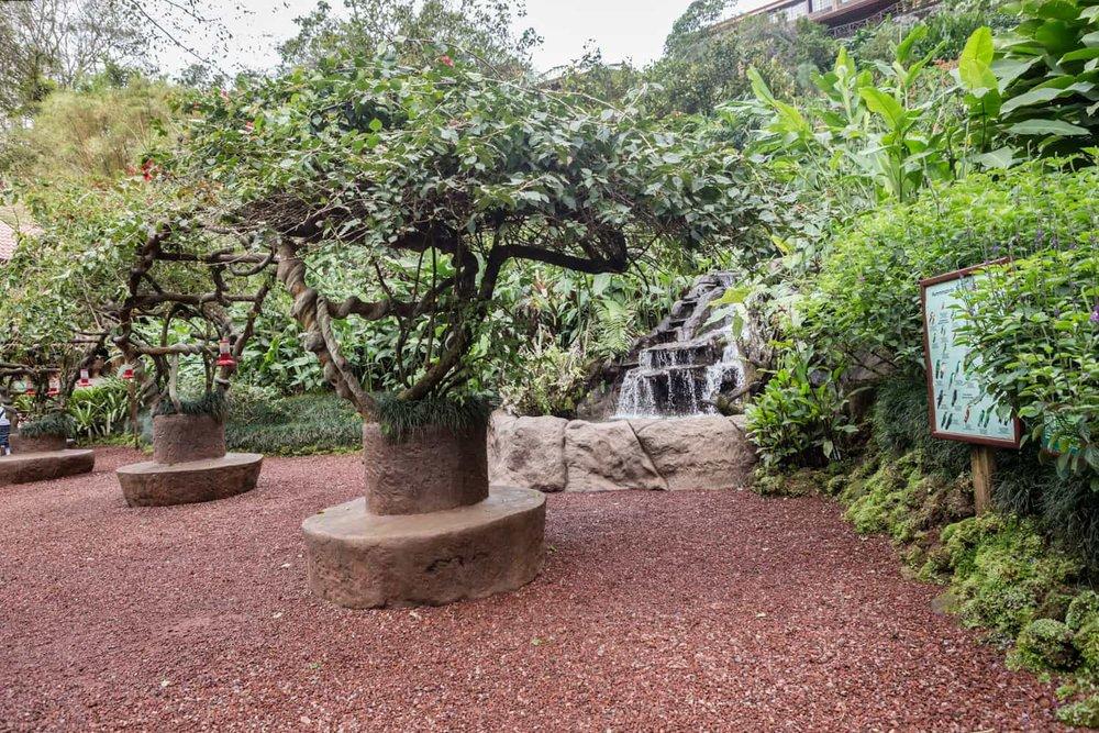Wedding ceremony venue in hummingbird garden at La Paz Waterfall Gardens.
