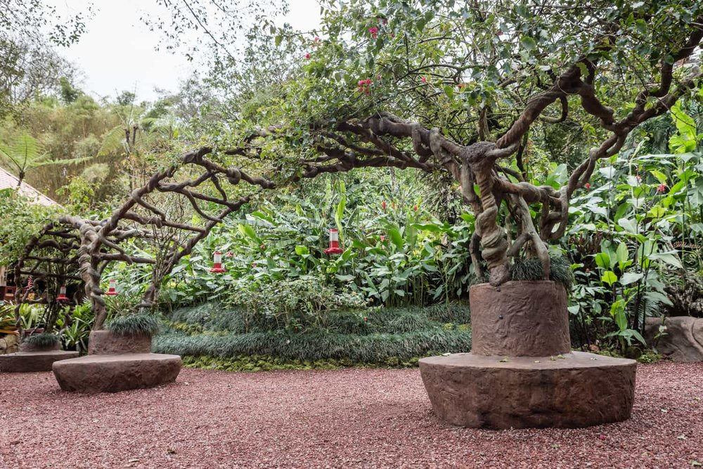 Side view of arches in humming bird garden with vines and bird feeders.