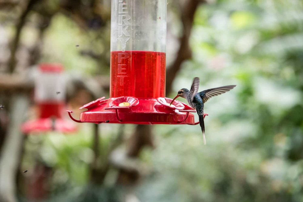 Hummingbird flying in intimate venue for amazing nature wedding in Costa Rica.