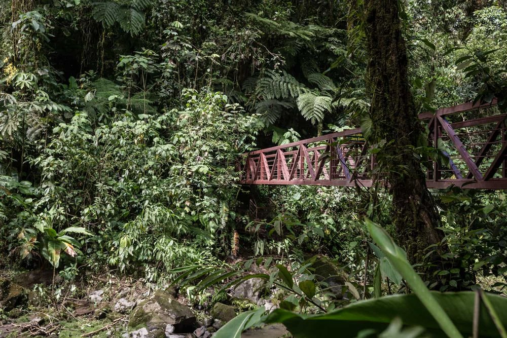 After wedding picture location on red bride crossing river in cloud forest at Peace Lodge.