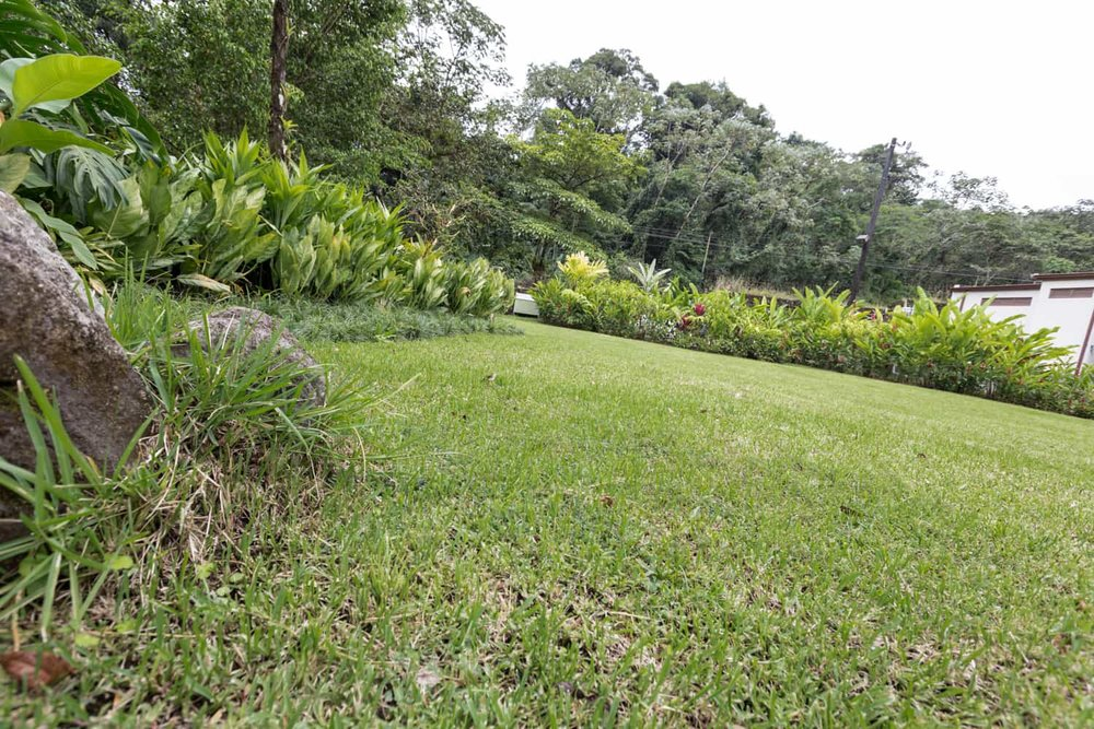 Exotic flowers and rainforest along border of lawn area for ceremonies.