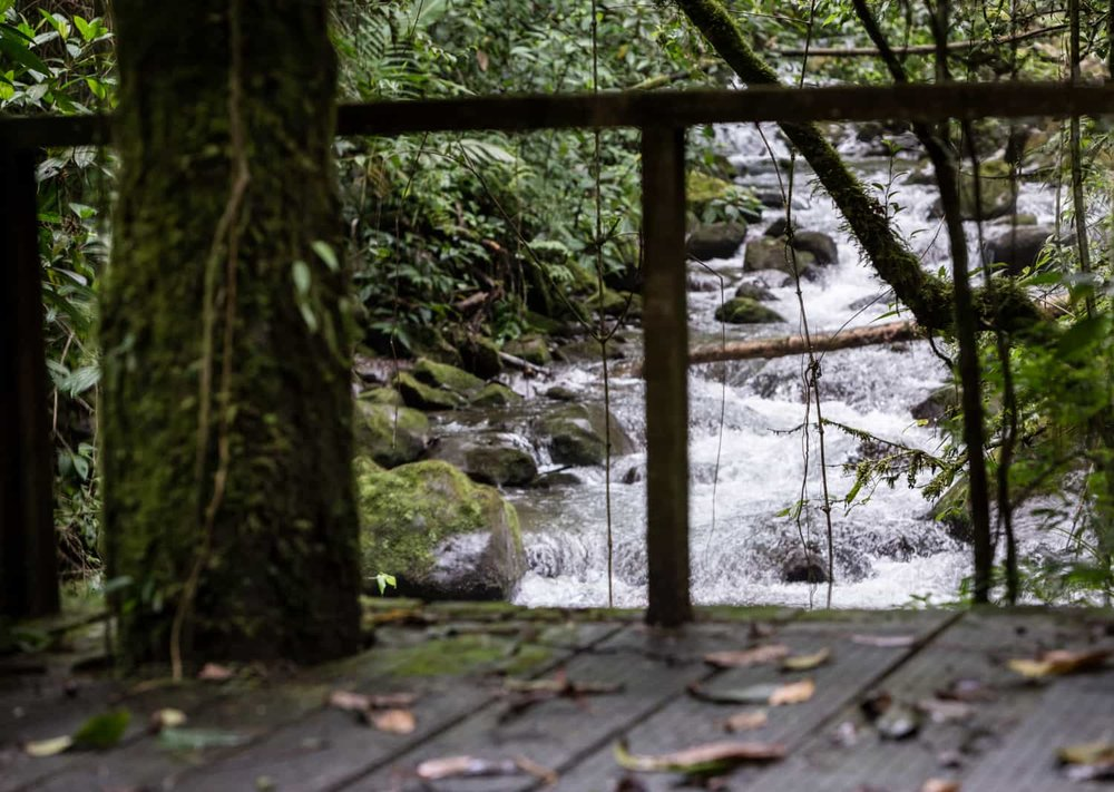 Image of river flowing under cloud forest wedding location.