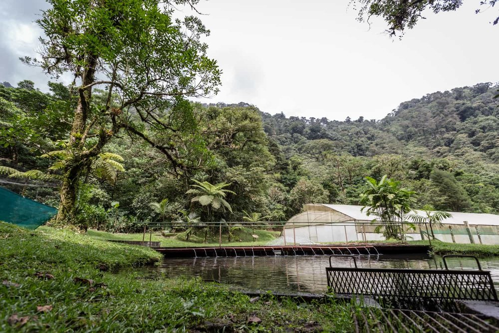 Trout pond and greenhouse at El Silencio Lodge.
