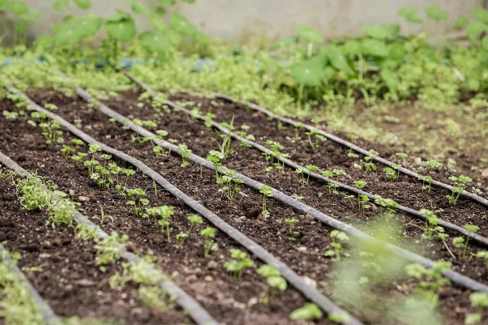 Seedlings in El Silencio Lodge's organic greenhouse.