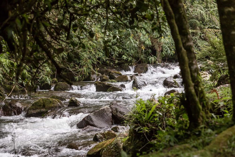 River in cloud forest behind guest Reception Building at El Silencio Lodge & Spa in Bajos del toro.