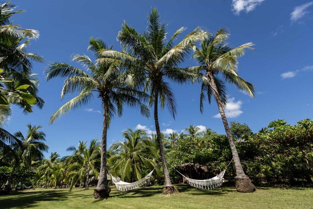 Hammock between palm trees in wedding ceremony site.