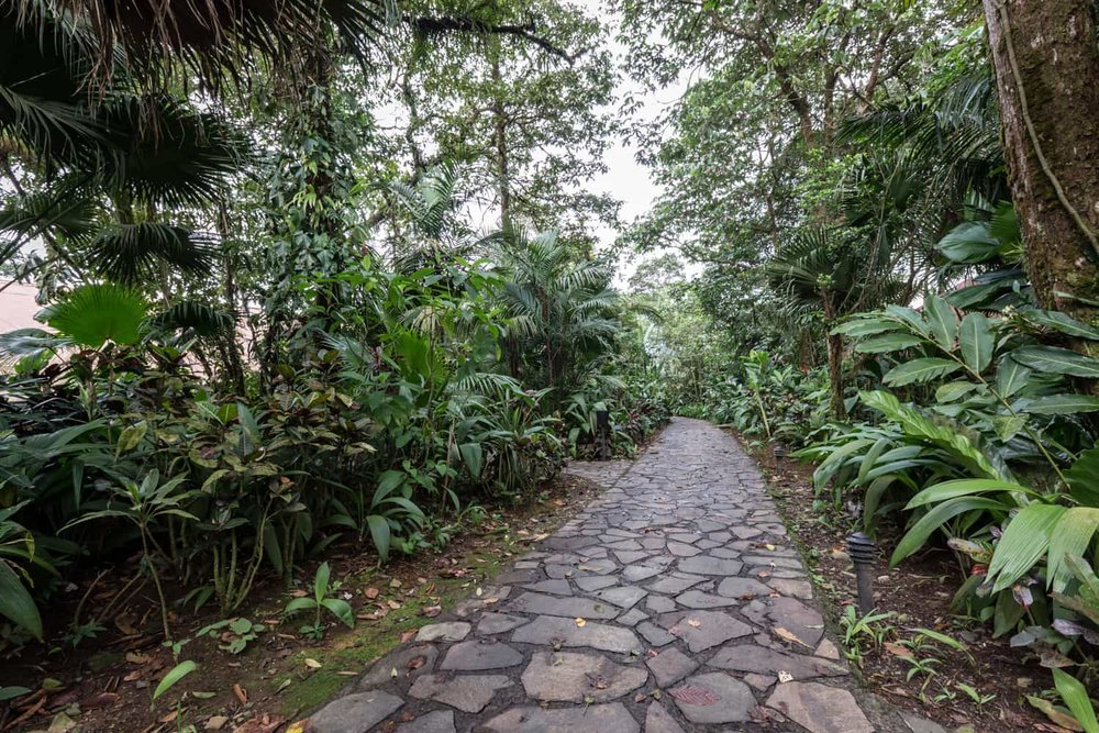Stone path leading to gust room in rainforest.