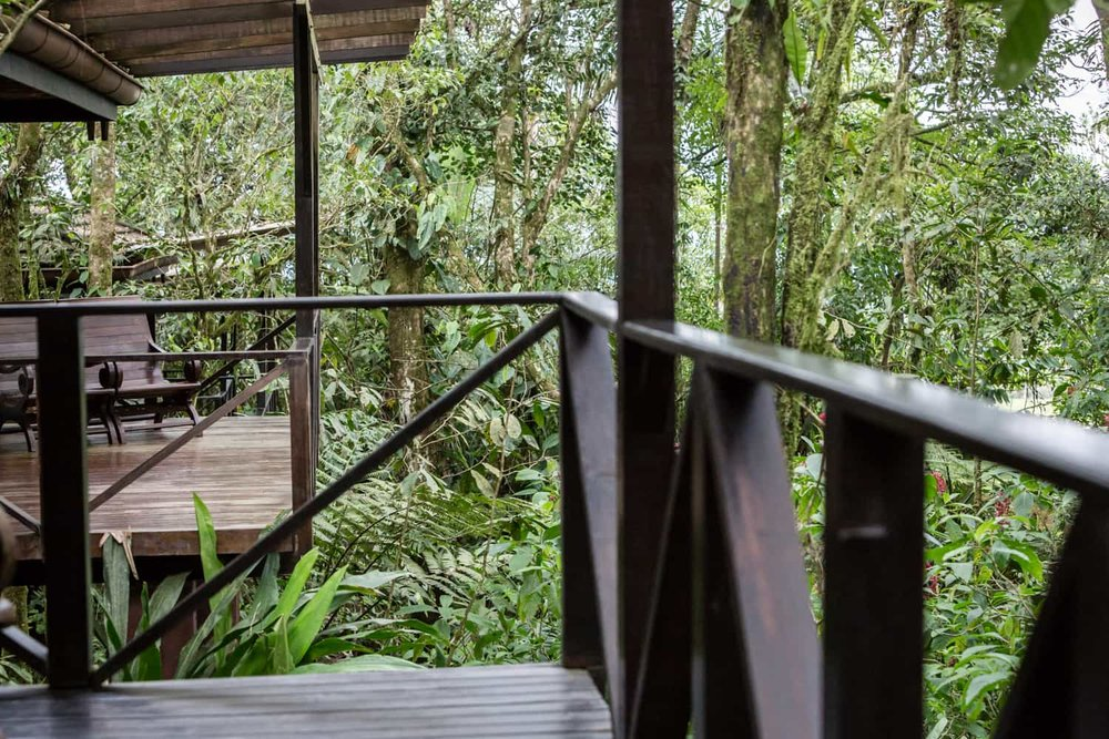 Intimate rainforest wedding location on honeymoon suite wood deck.