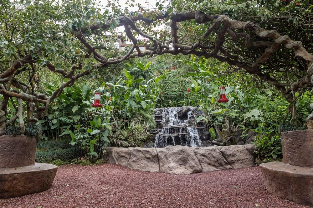 Humming bird garden with waterfall and arches.