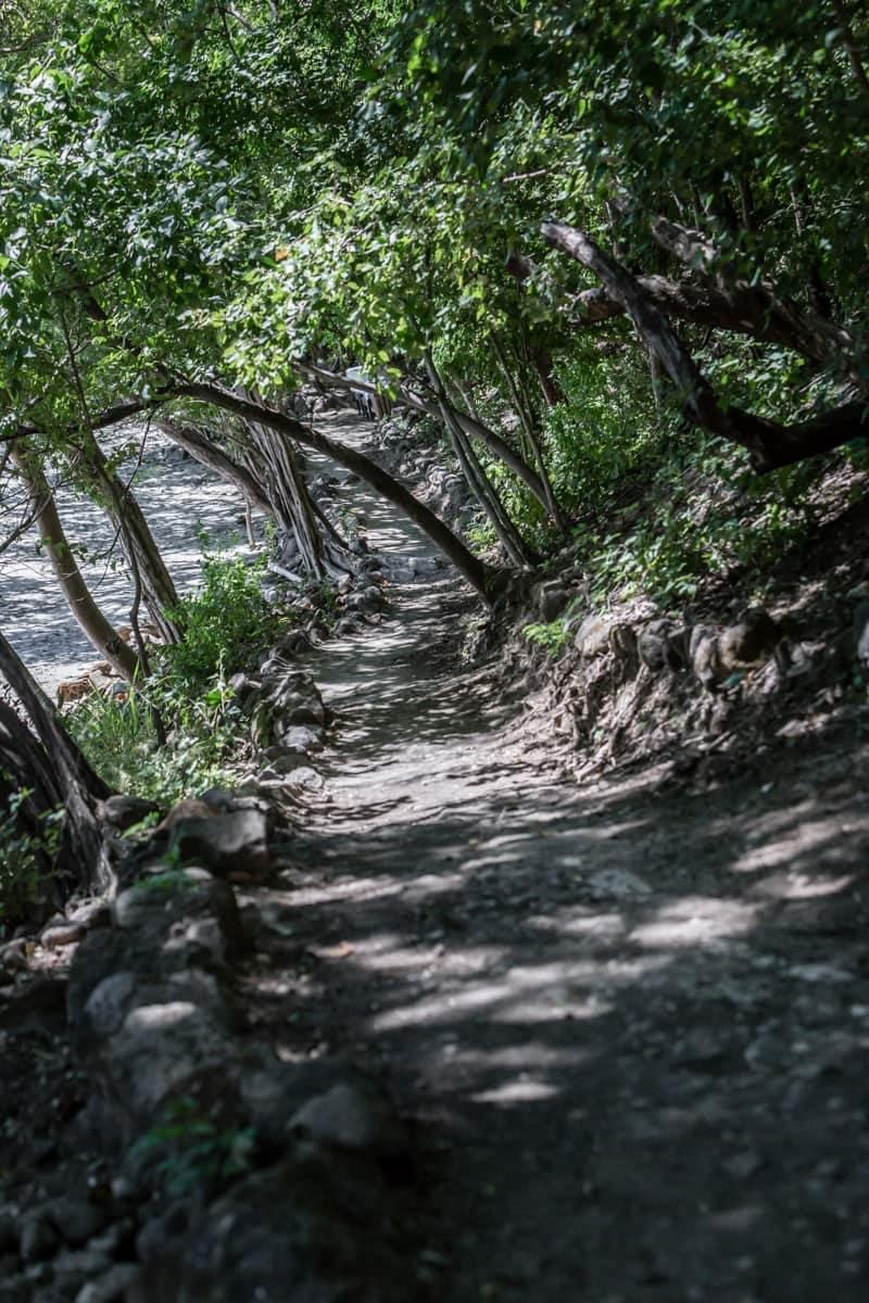Wooded path leading to Sobrero Claro Beach.