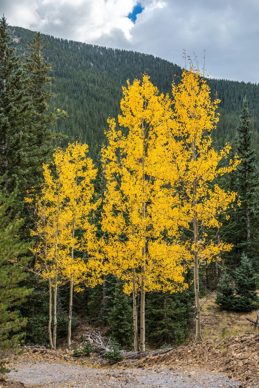 9-29-15 Inner Basin Trail-188.jpg