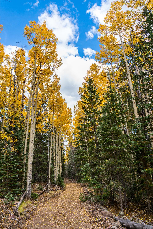 9-29-15 Inner Basin Trail-155.jpg