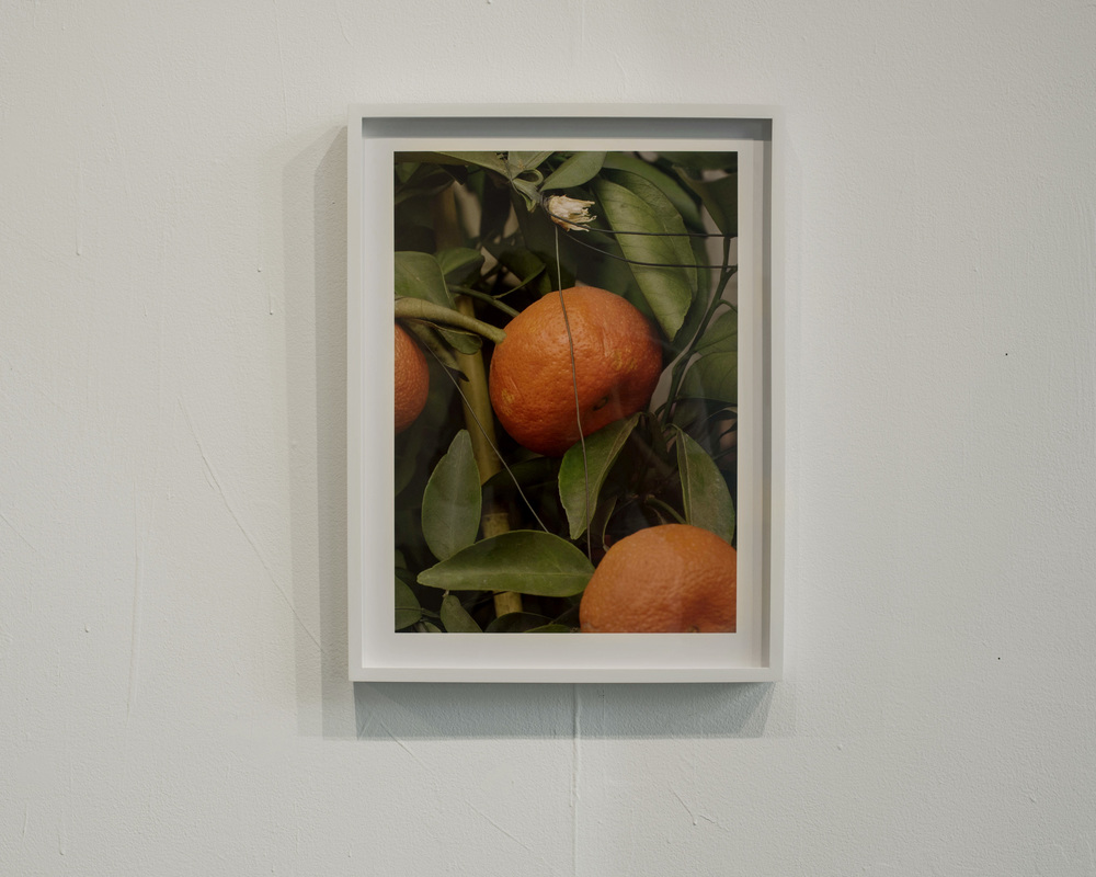 oranges-wall-(web).jpg
