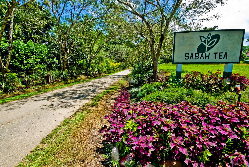 sabah-tea-garden1.jpg