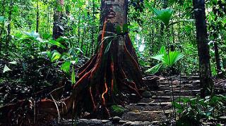 La_Cusinga_rainforest.jpg