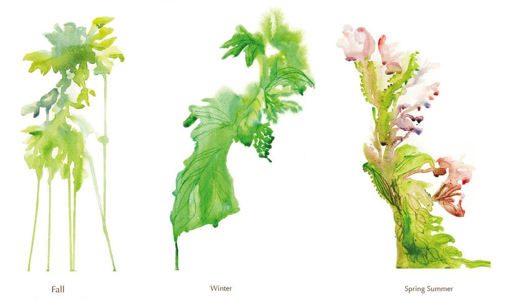 plant_mado_todd_morel.jpg
