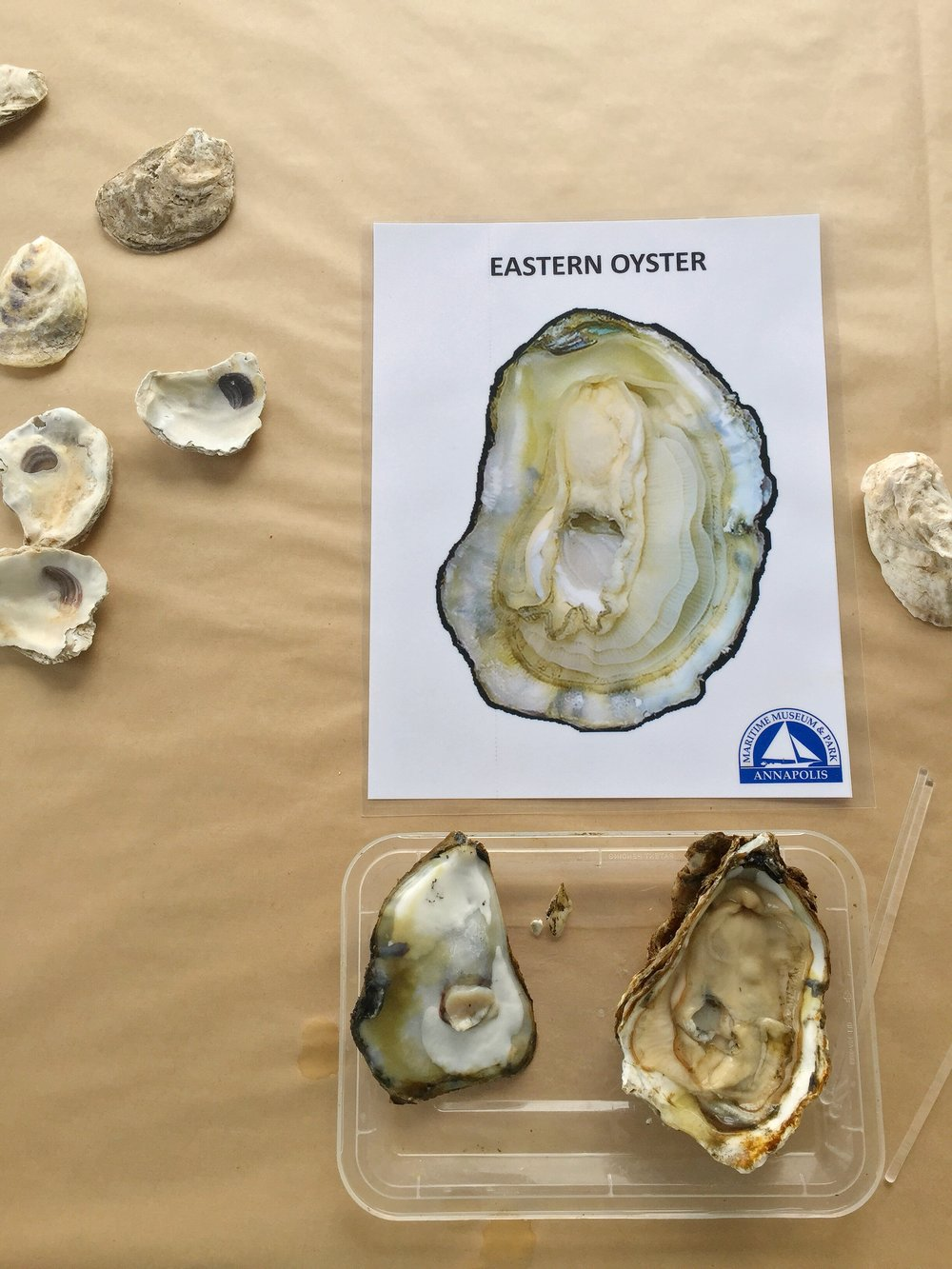 oyster-education.JPG