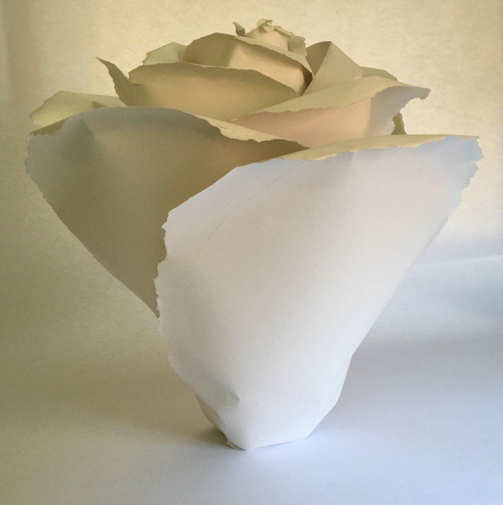 rosa a.JPG