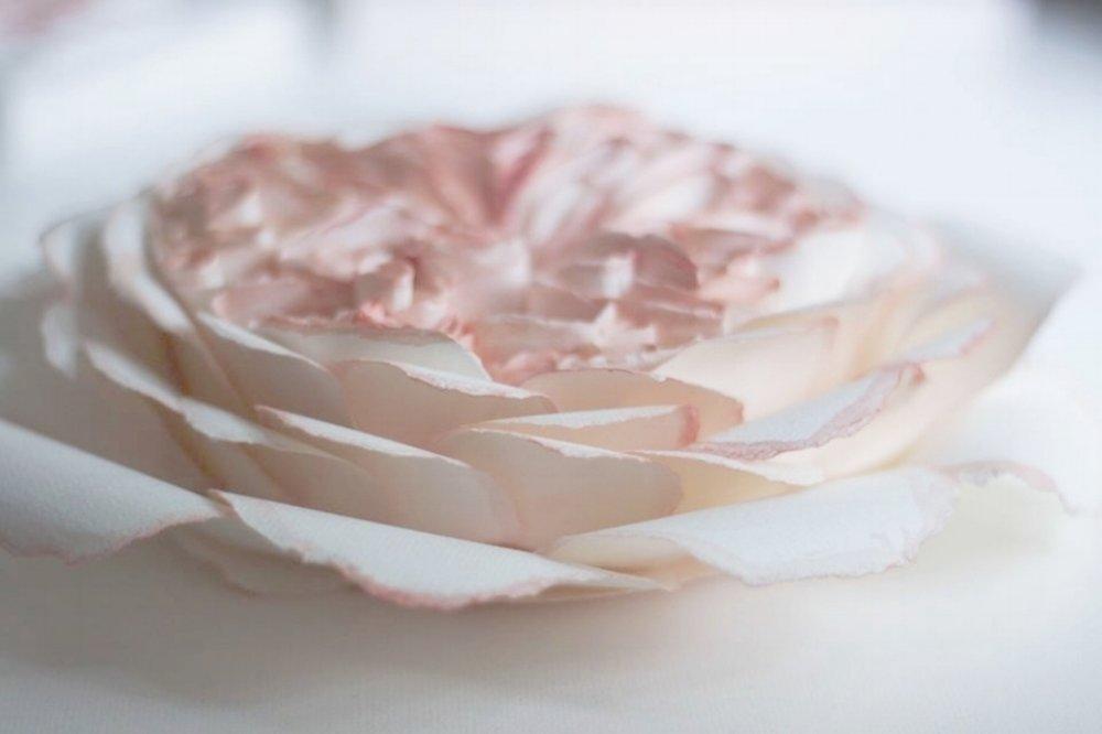 pinkheader.jpg