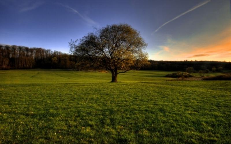 Tree_of_Life_.jpg