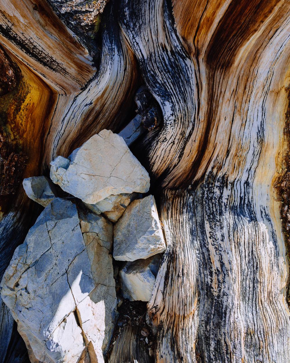 Bristlecone Pine State Park, California, USA