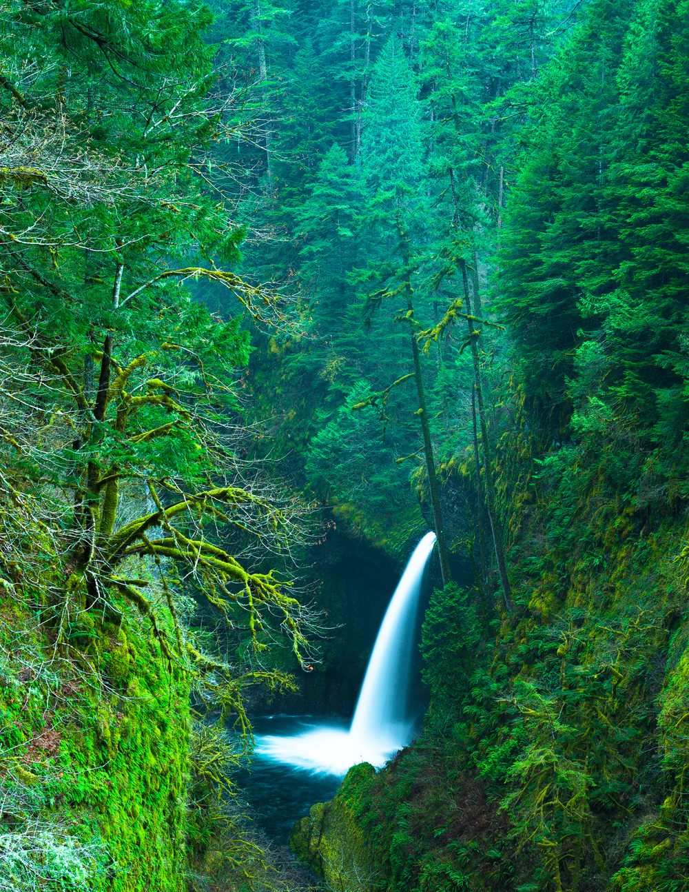 Columbia River Gorge Area, Metlako Falls, Oregon, USA