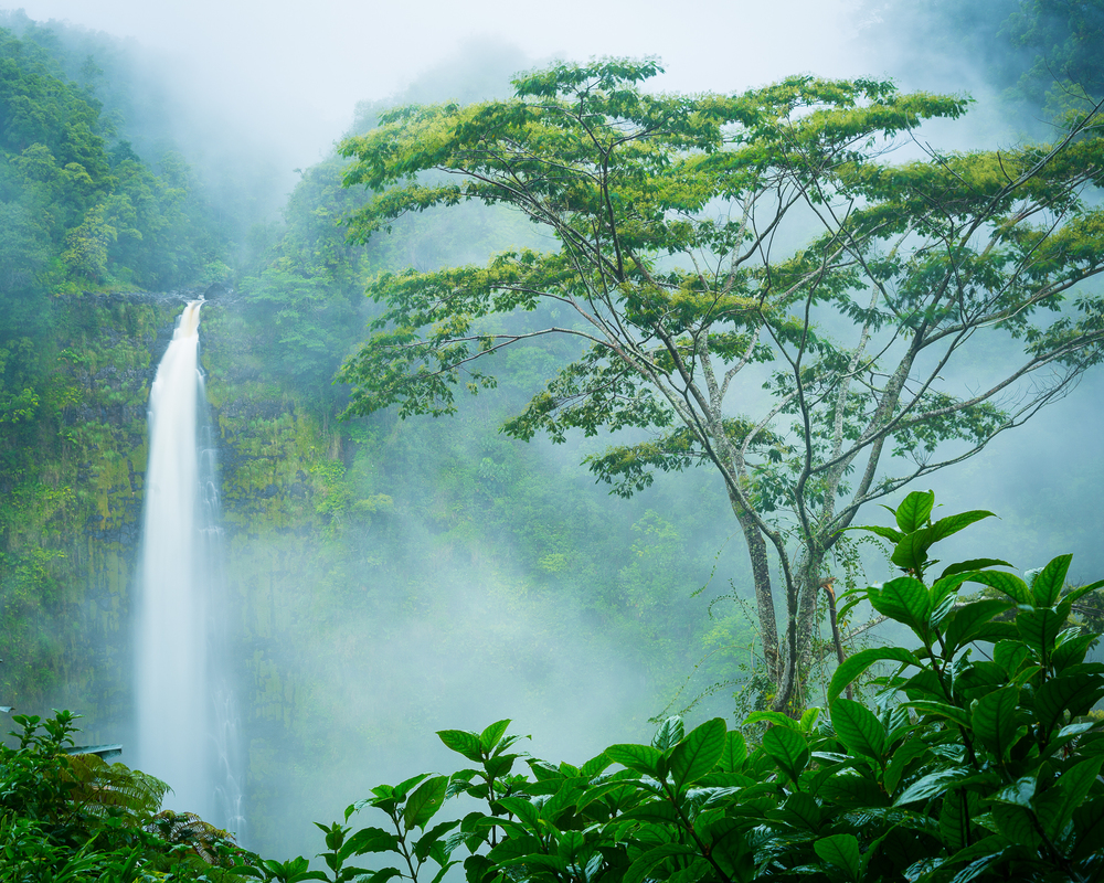 Akaka Falls State Park, Hawaii, Big Island, USA
