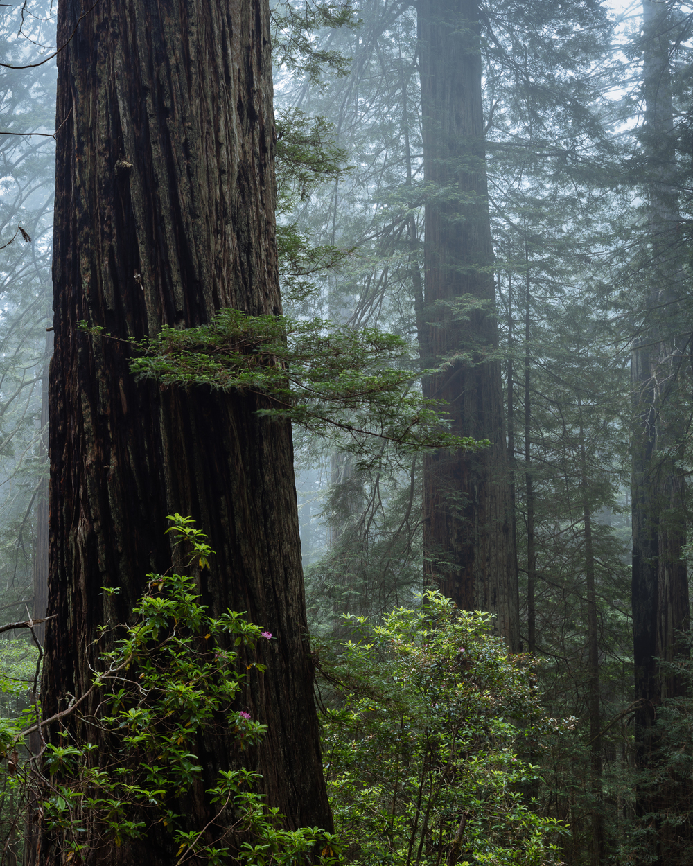 Redwoods and Del Norte National Parks, California, USA