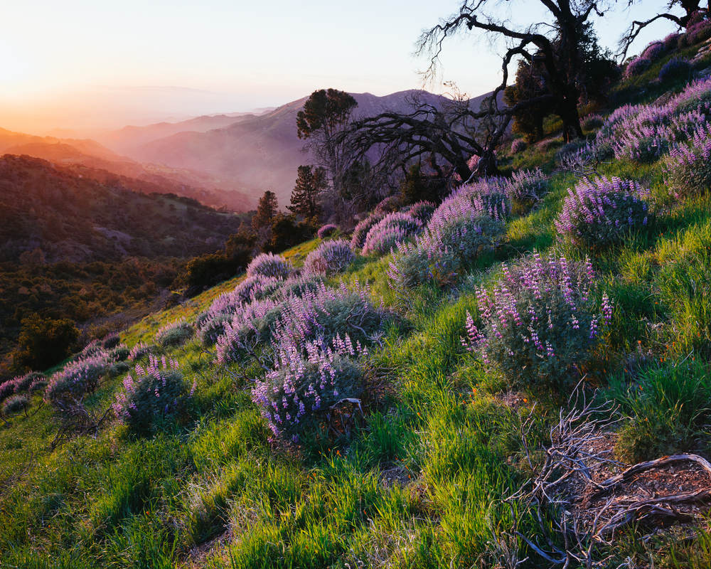 Los Padres National Forest, California,     USA