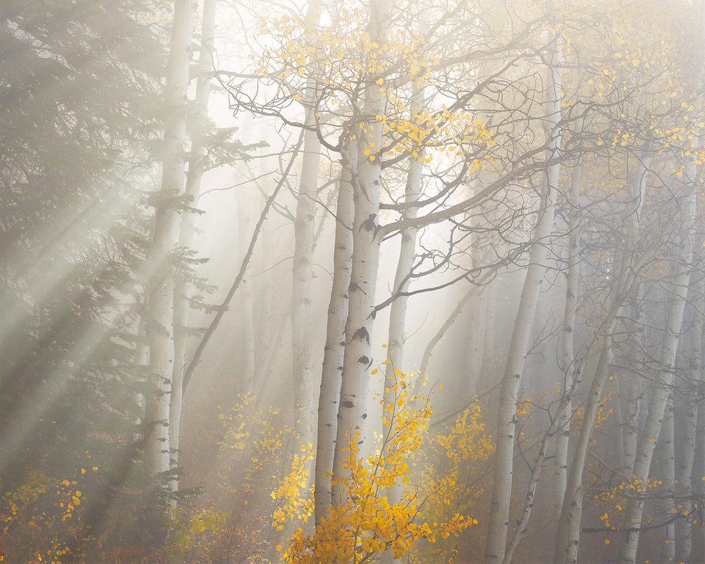 Aspens Light