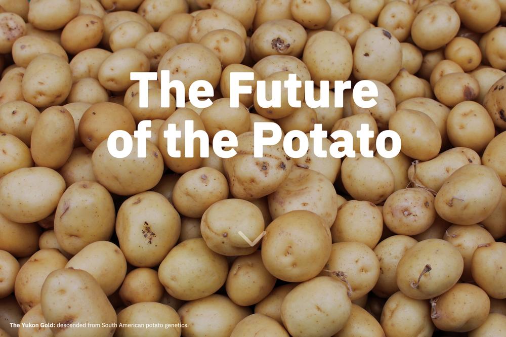 potatoOfTheFuture_subpage.png