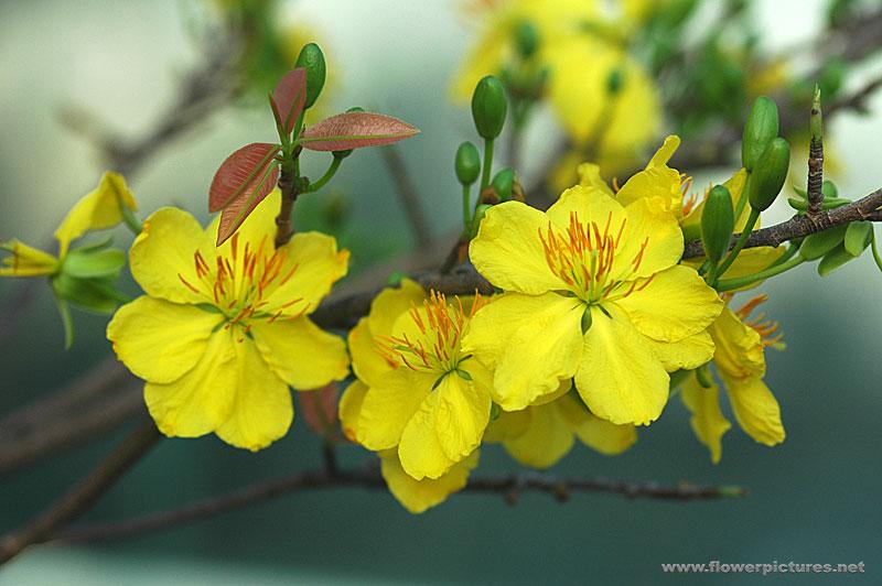 vn flower spring.jpg