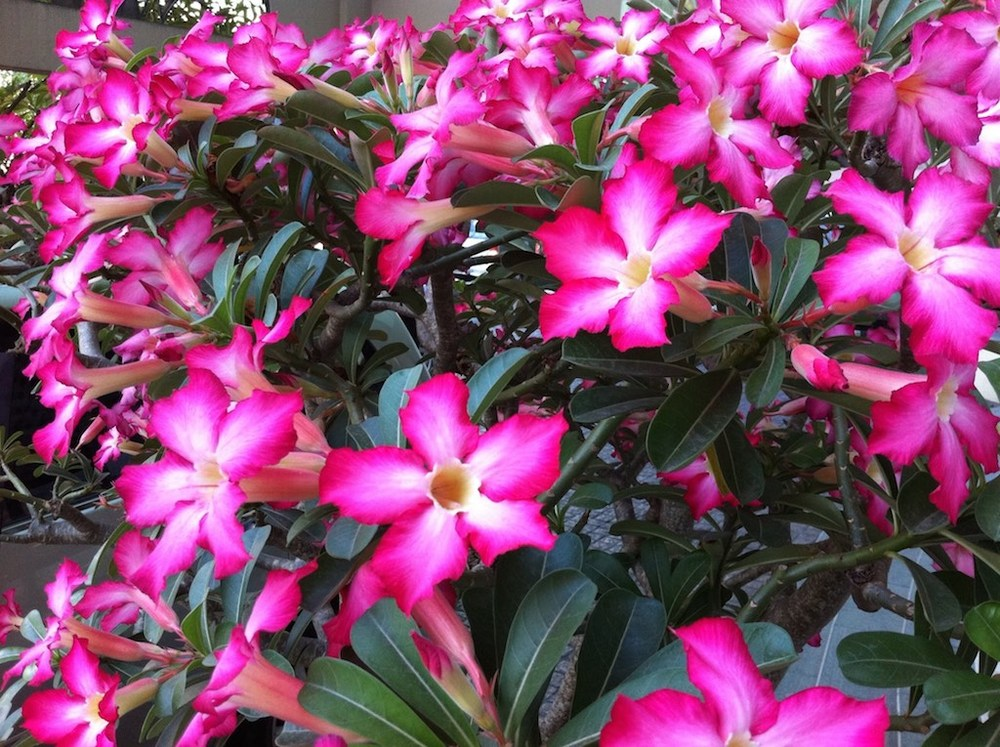 vn flower 1 copy.jpg