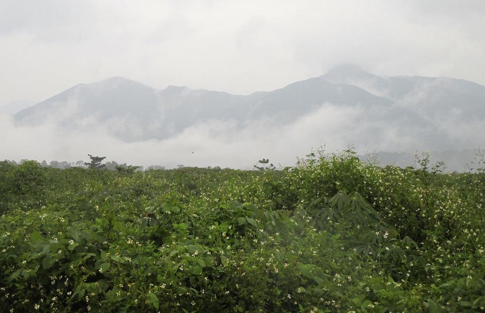 Site of the Khe Sanh Peace Garden, 2015