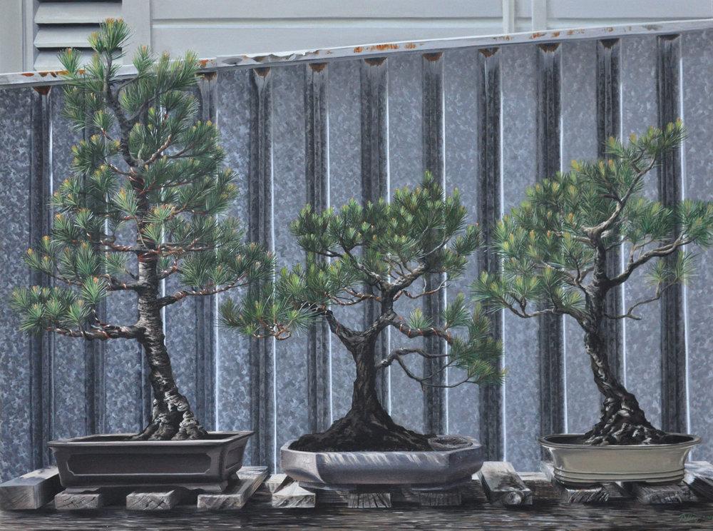 bonsai_med_web.jpg