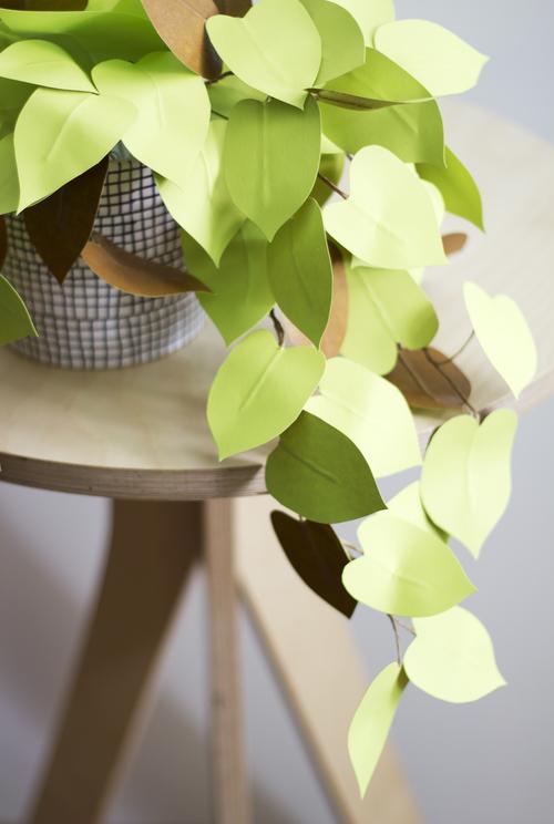 Corrie_Hogg_paper_heartleaf_philodendron_plant_DIY_5.jpg