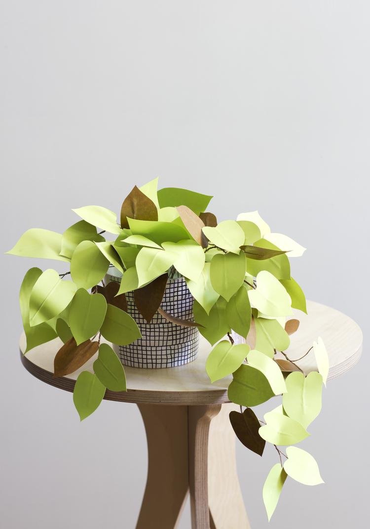 Corrie_Hogg_paper_heartleaf_philodendron_plant_DIY_4.jpg