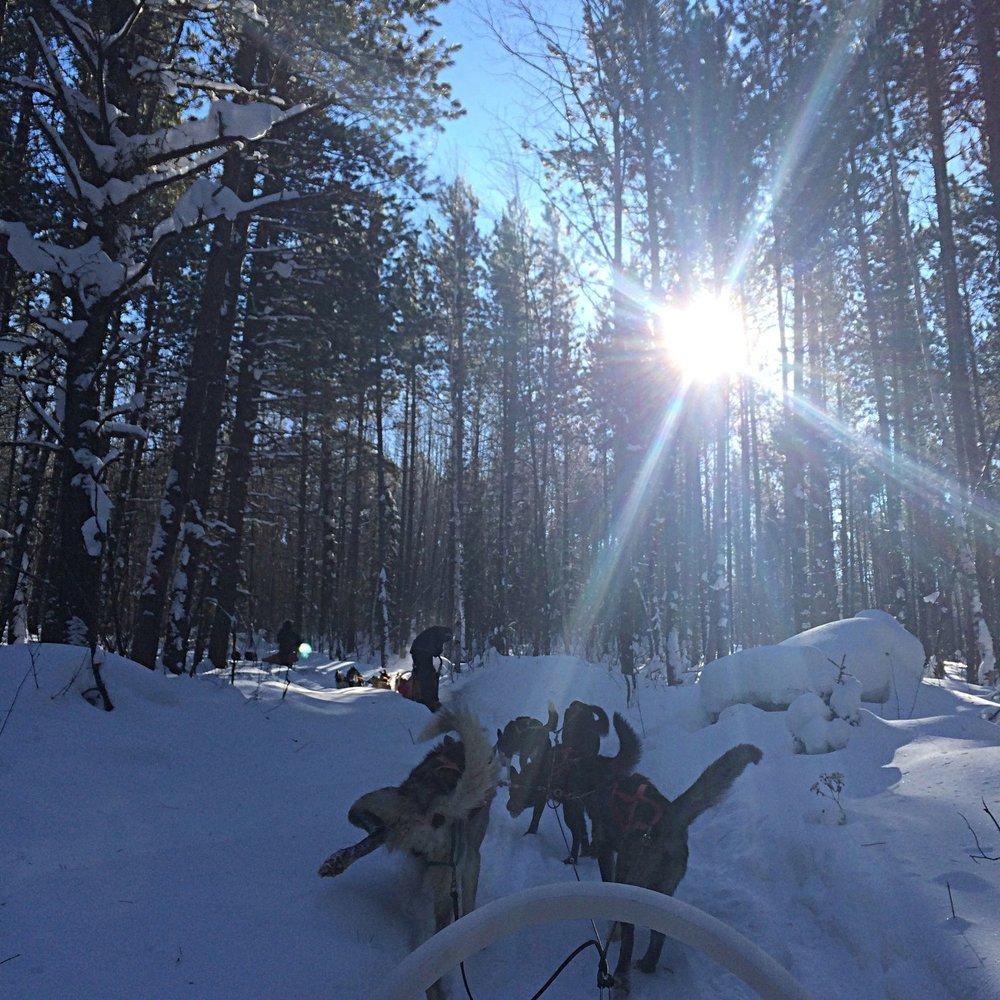 dog-sledding 1.jpg