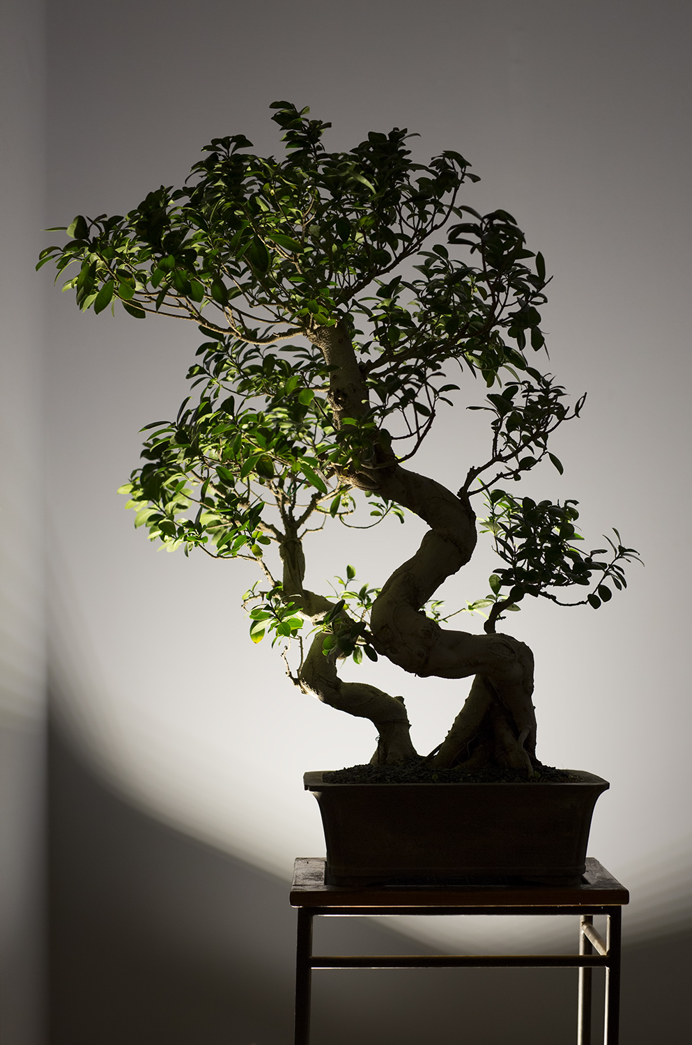 Elegant bonsai theme at OPEN TENT by CHI-KA.jpg