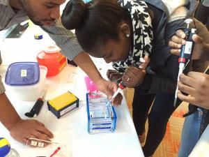 Student test gel electrophoresis