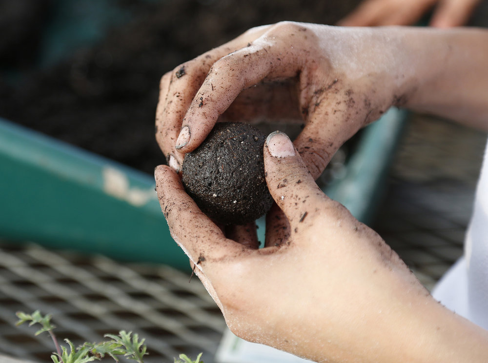 "A student prepares a ""flower bomb"" — a ball of soil packed with flower seeds."