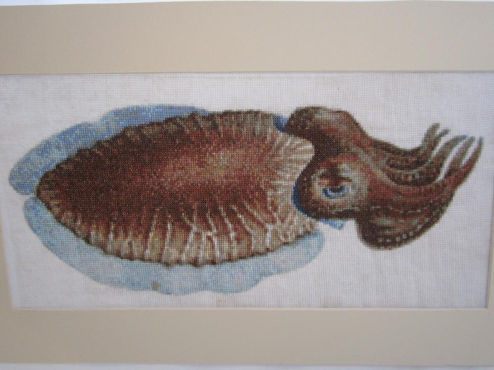 Cuttlefish X Stitch 2.JPG